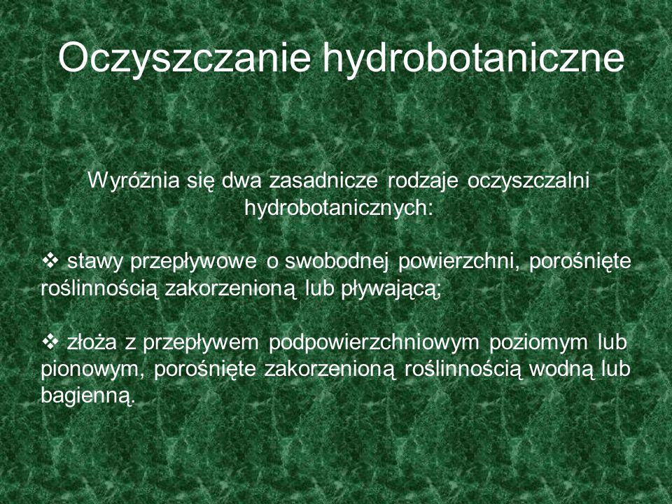 Oczyszczanie hydrobotaniczne