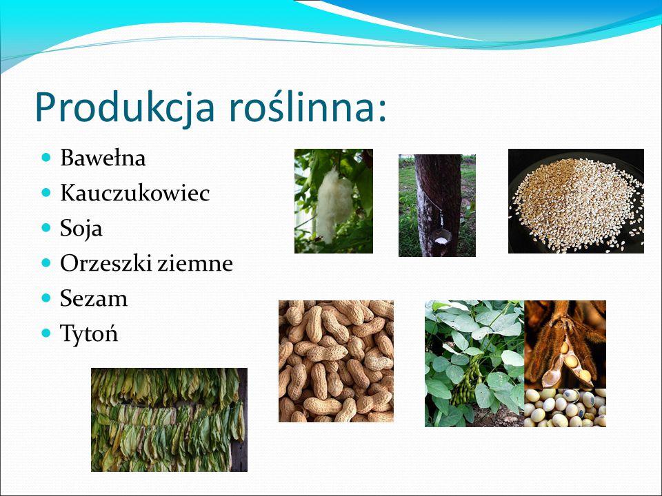 Produkcja roślinna: Bawełna Kauczukowiec Soja Orzeszki ziemne Sezam
