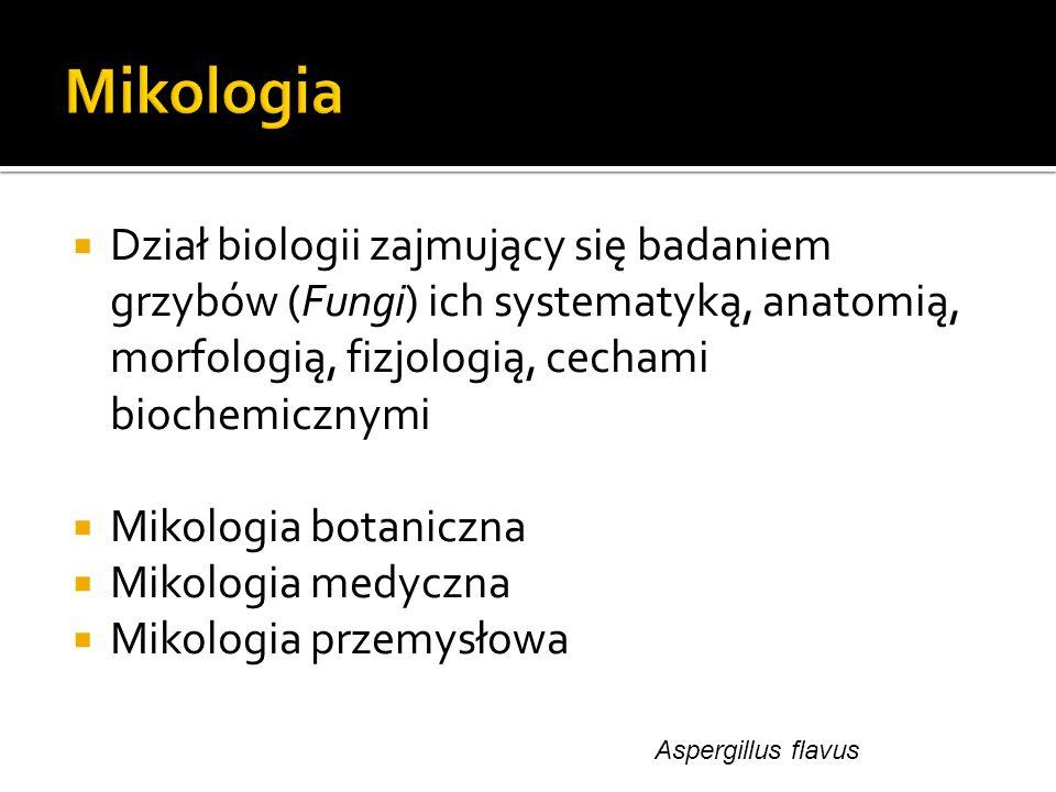 Mikologia Dział biologii zajmujący się badaniem grzybów (Fungi) ich systematyką, anatomią, morfologią, fizjologią, cechami biochemicznymi.