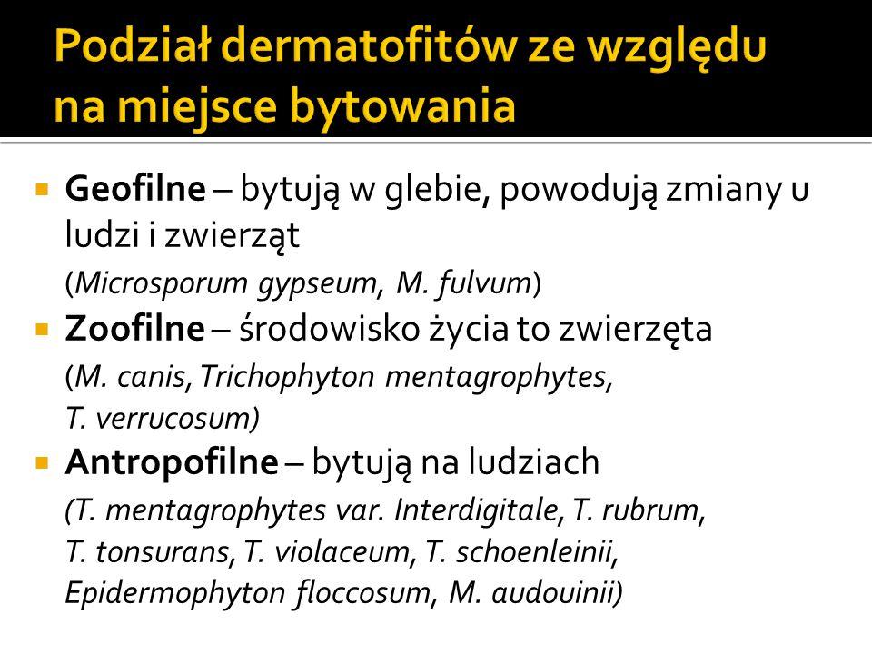 Podział dermatofitów ze względu na miejsce bytowania