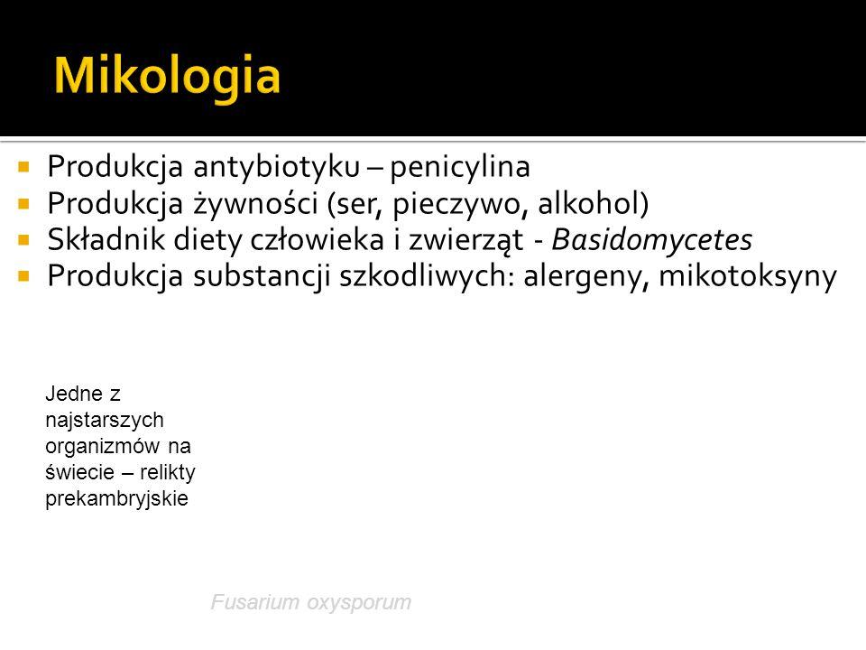 Mikologia Produkcja antybiotyku – penicylina