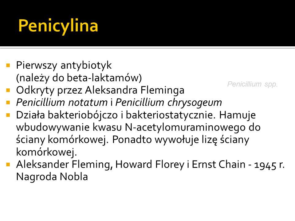 Penicylina Pierwszy antybiotyk (należy do beta-laktamów)