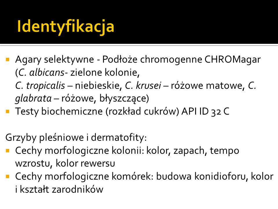 Identyfikacja Agary selektywne - Podłoże chromogenne CHROMagar (C. albicans- zielone kolonie,