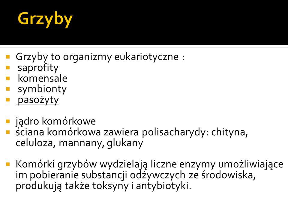 Grzyby Grzyby to organizmy eukariotyczne : saprofity komensale