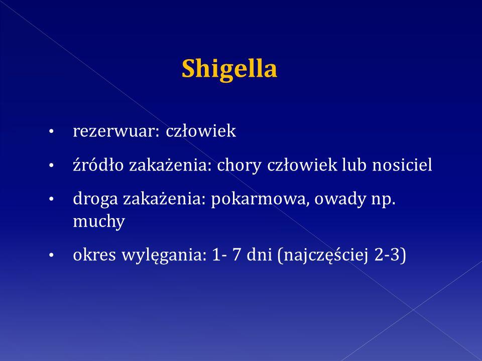 Shigella rezerwuar: człowiek