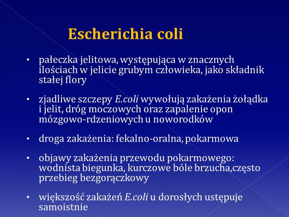 Escherichia coli pałeczka jelitowa, występująca w znacznych ilościach w jelicie grubym człowieka, jako składnik stałej flory.