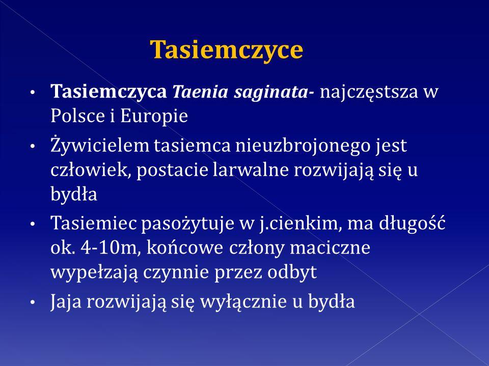 Tasiemczyce Tasiemczyca Taenia saginata- najczęstsza w Polsce i Europie.