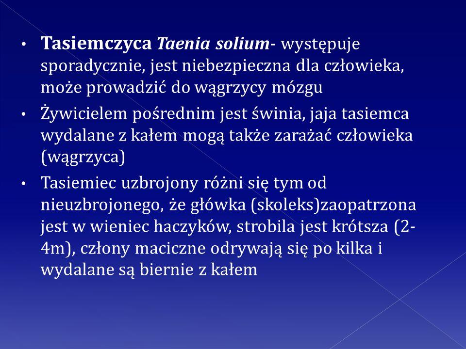 Tasiemczyca Taenia solium- występuje sporadycznie, jest niebezpieczna dla człowieka, może prowadzić do wągrzycy mózgu