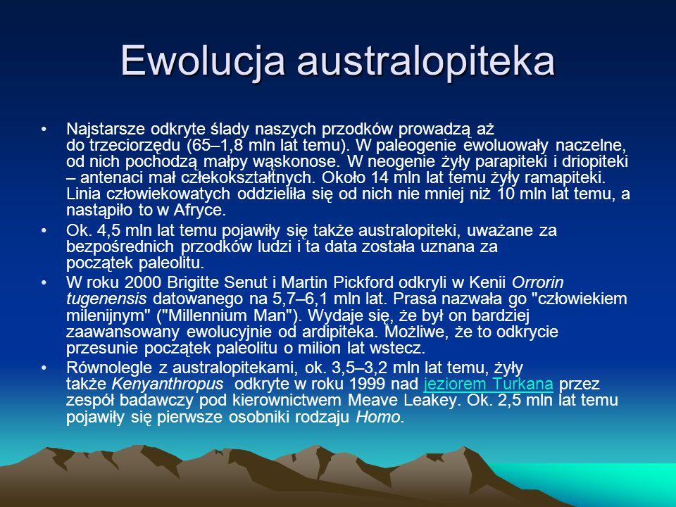 Ewolucja australopiteka