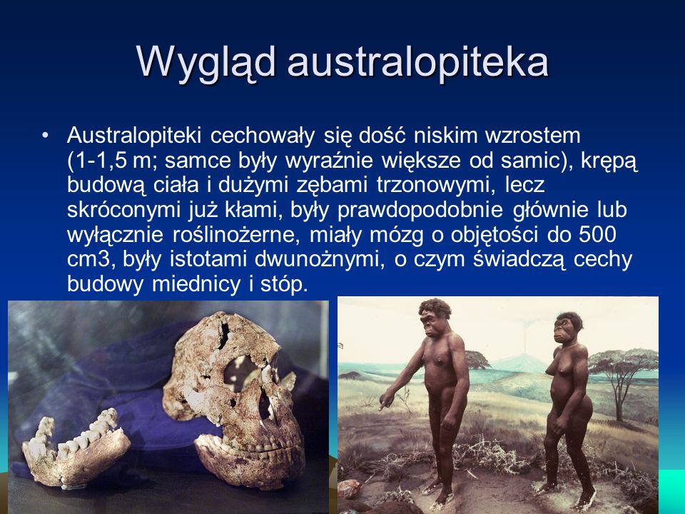 Wygląd australopiteka