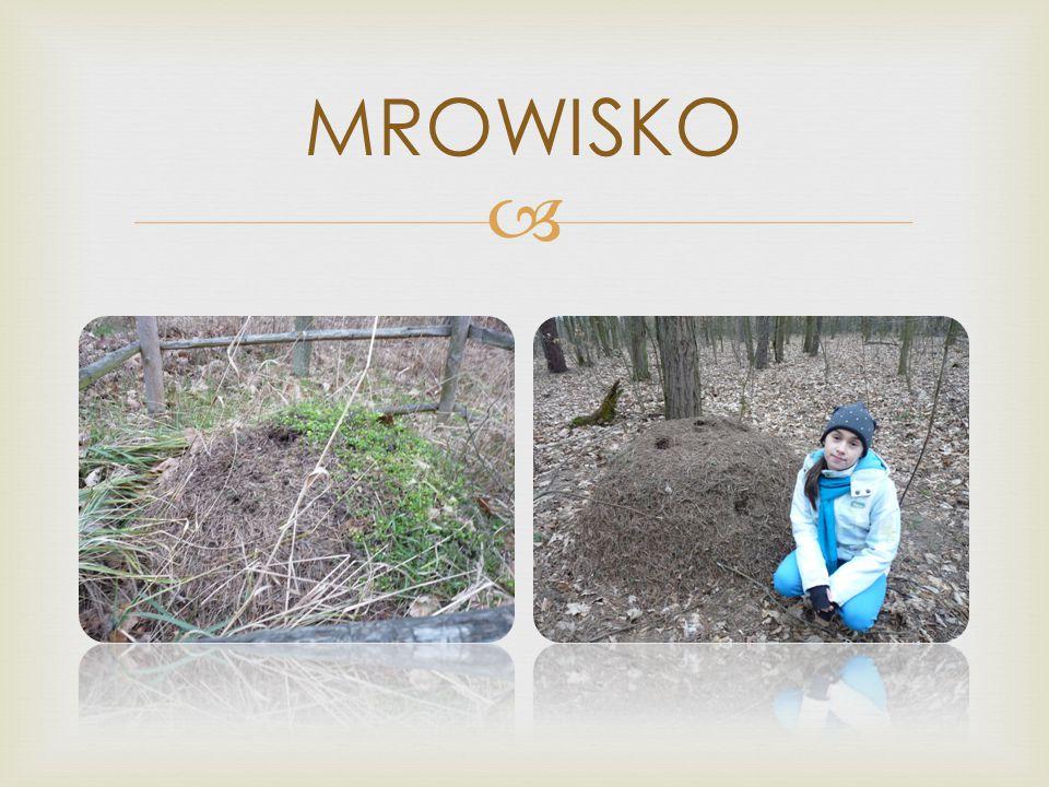MROWISKO