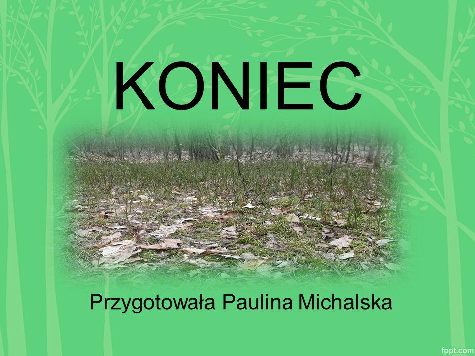 Przygotowała Paulina Michalska