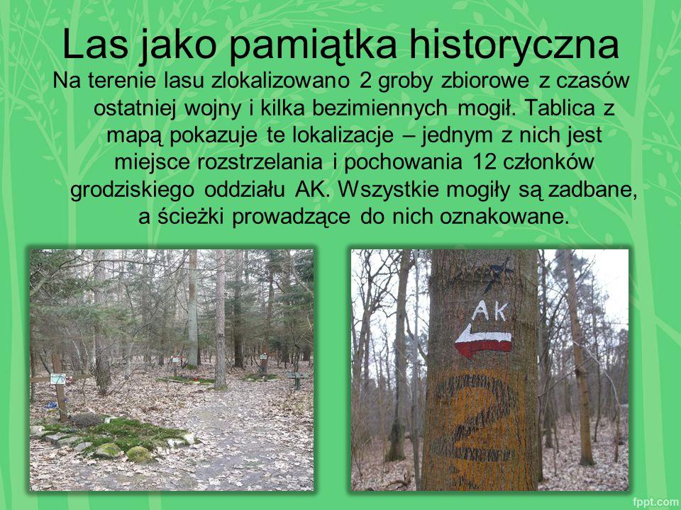 Las jako pamiątka historyczna