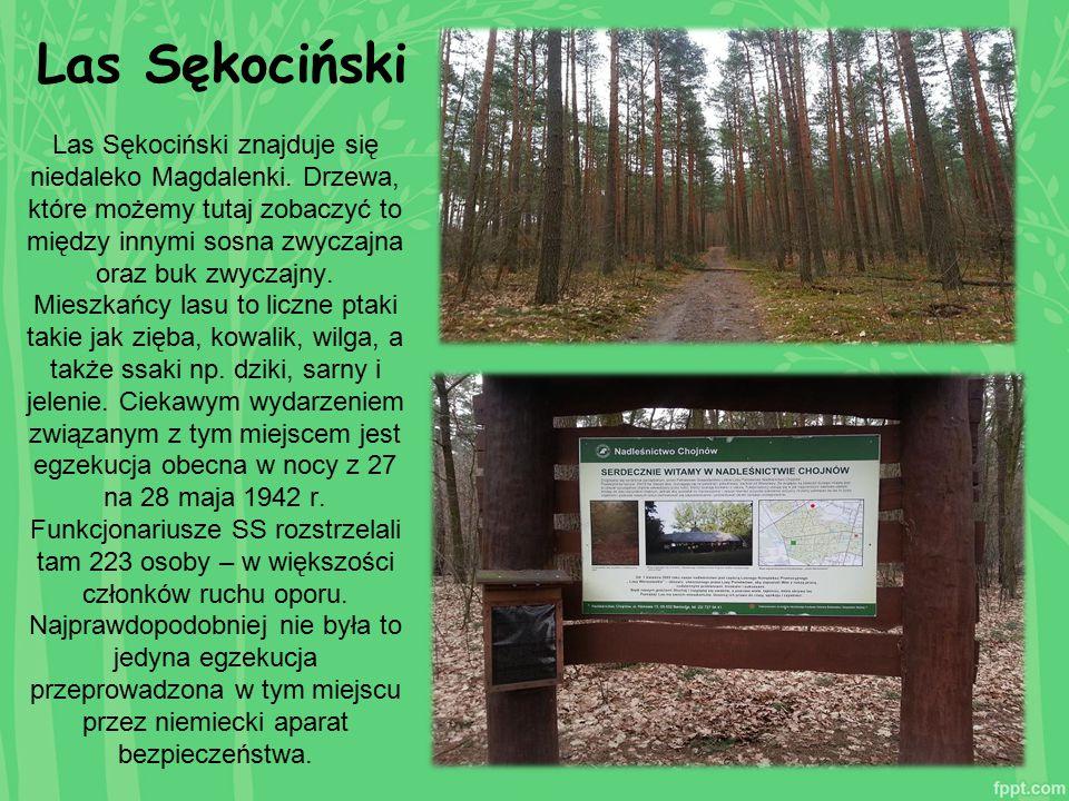 Las Sękociński