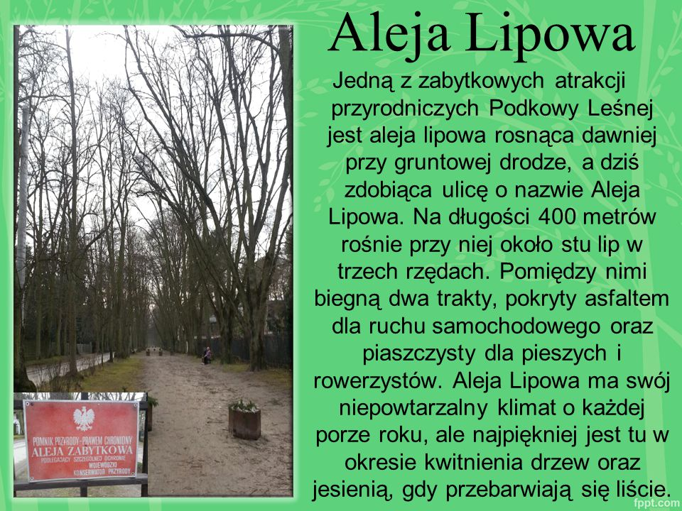 Aleja Lipowa