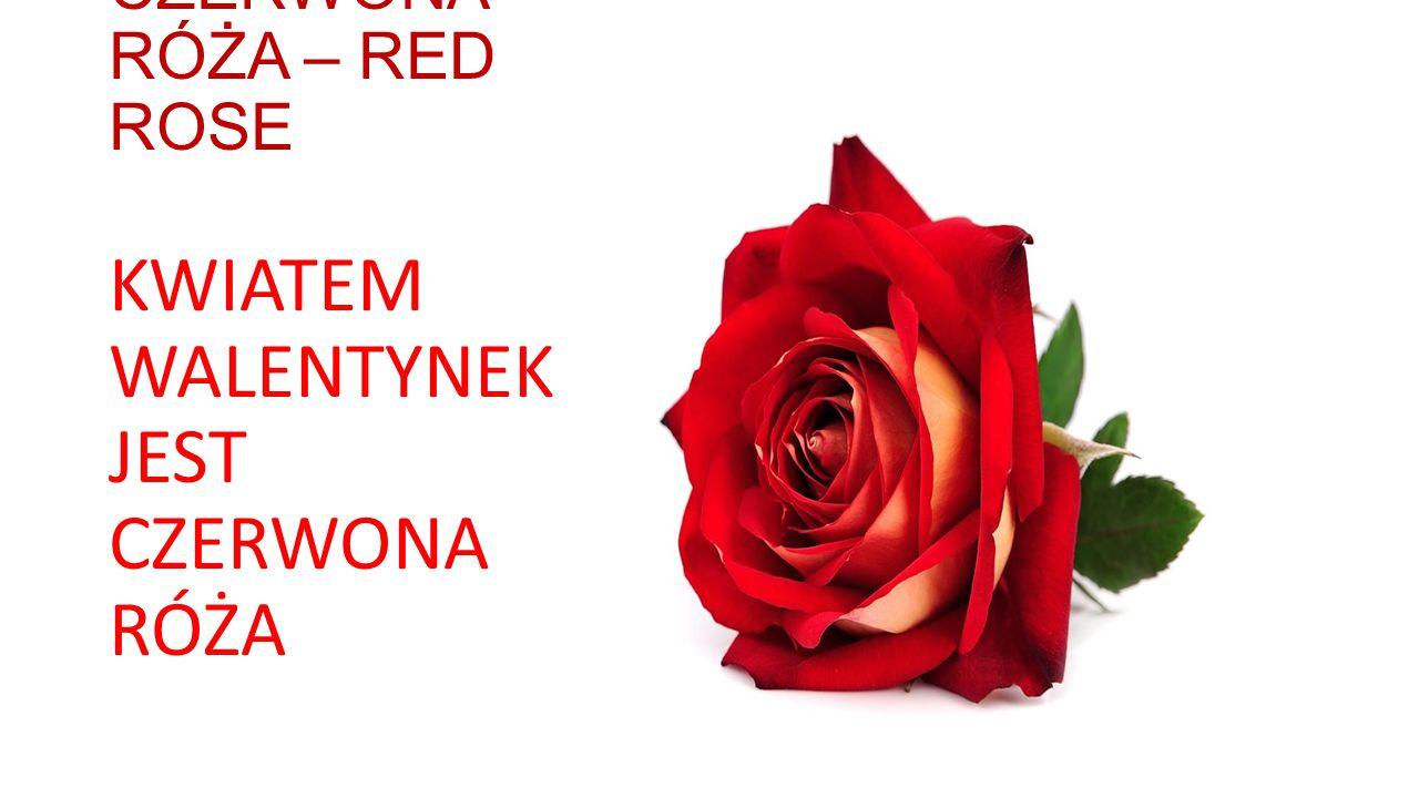 CZERWONA RÓŻA – RED ROSE