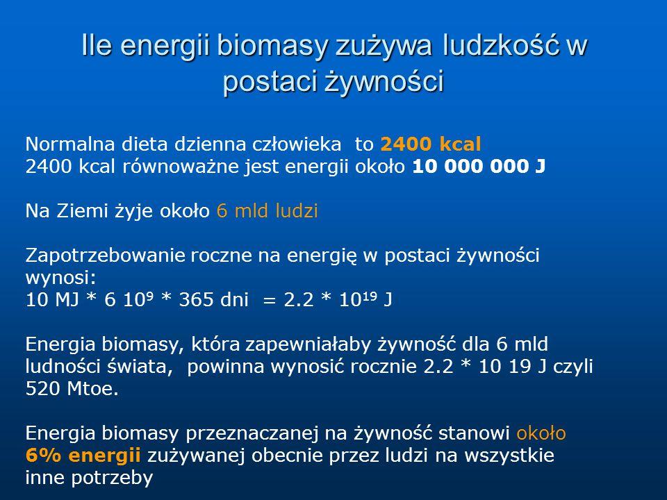 Ile energii biomasy zużywa ludzkość w postaci żywności
