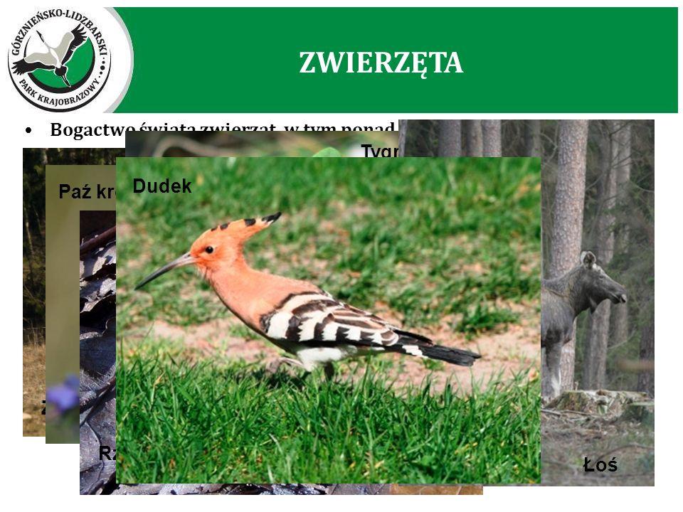 ZWIERZĘTA Bogactwo świata zwierząt, w tym ponad 250 gatunków kręgowców