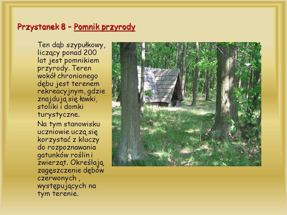 Przystanek 8 – Pomnik przyrody