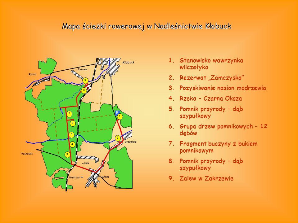 Mapa ścieżki rowerowej w Nadleśnictwie Kłobuck