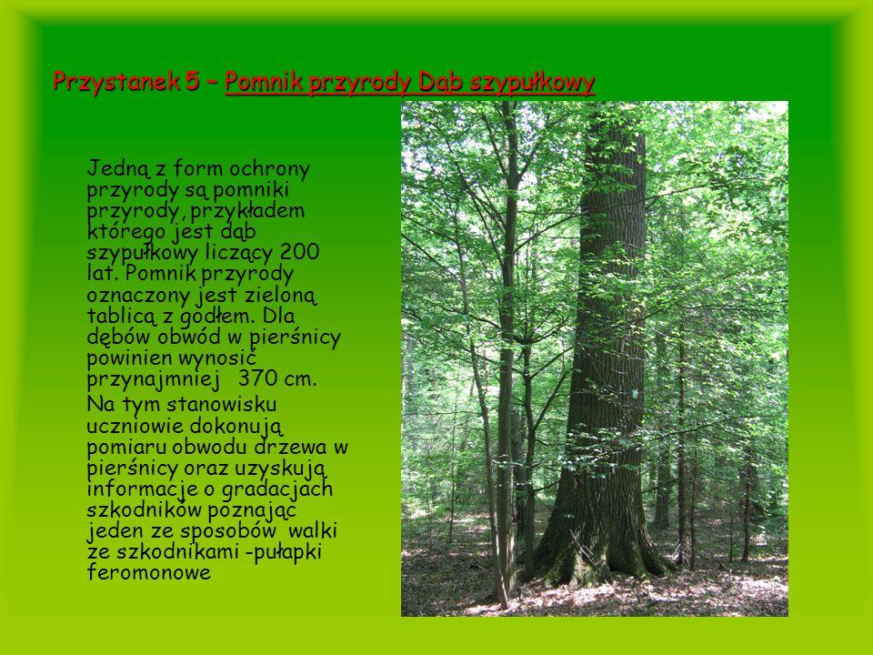 Przystanek 5 – Pomnik przyrody Dąb szypułkowy
