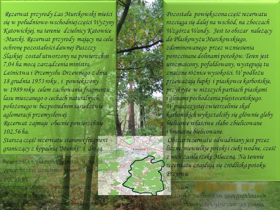 Rezerwat przyrody Las Murckowski mieści się w południowo-wschodniej części Wyżyny Katowickiej, na terenie dzielnicy Katowice -Murcki. Rezerwat przyrody mający na celu ochronę pozostałości dawnej Puszczy Śląskiej został utworzony na powierzchni 7,04 ha mocą zarządzenia ministra Leśnictwa i Przemysłu Drzewnego z dnia 18 grudnia 1953 roku , i powiększony w 1989 roku celem zachowania fragmentu lasu mieszanego o cechach naturalnych, położonego w bezpośrednim sąsiedztwie aglomeracji przemysłowej.