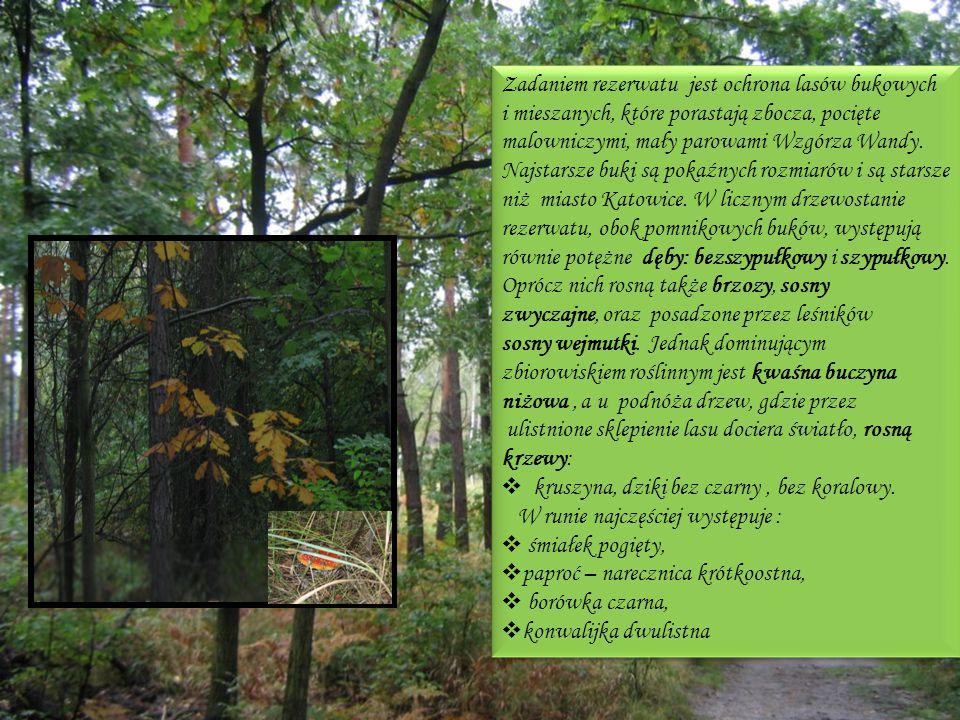Zadaniem rezerwatu jest ochrona lasów bukowych i mieszanych, które porastają zbocza, pocięte malowniczymi, mały parowami Wzgórza Wandy. Najstarsze buki są pokaźnych rozmiarów i są starsze niż miasto Katowice. W licznym drzewostanie rezerwatu, obok pomnikowych buków, występują równie potężne dęby: bezszypułkowy i szypułkowy. Oprócz nich rosną także brzozy, sosny zwyczajne, oraz posadzone przez leśników sosny wejmutki. Jednak dominującym zbiorowiskiem roślinnym jest kwaśna buczyna niżowa , a u podnóża drzew, gdzie przez