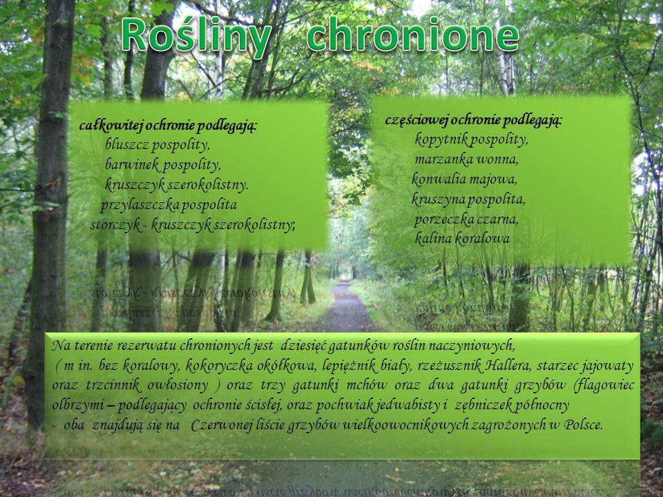Rośliny chronione częściowej ochronie podlegają: