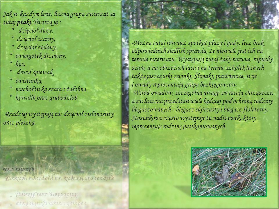 Jak w każdym lesie, liczną grupą zwierząt są tutaj ptaki. Tworzą ją :