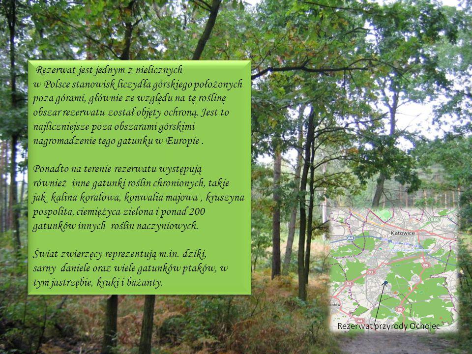 Rezerwat jest jednym z nielicznych w Polsce stanowisk liczydła górskiego położonych poza górami, głównie ze względu na tę roślinę obszar rezerwatu został objęty ochroną. Jest to najliczniejsze poza obszarami górskimi nagromadzenie tego gatunku w Europie .