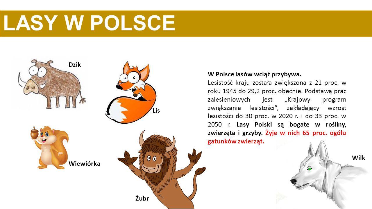 LASY W POLSCE Dzik W Polsce lasów wciąż przybywa.
