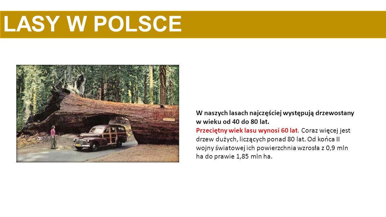 LASY W POLSCE W naszych lasach najczęściej występują drzewostany w wieku od 40 do 80 lat.