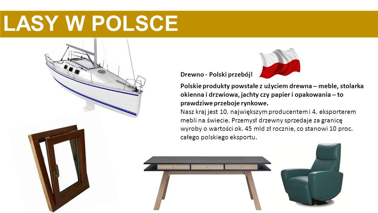 LASY W POLSCE Drewno - Polski przebój!