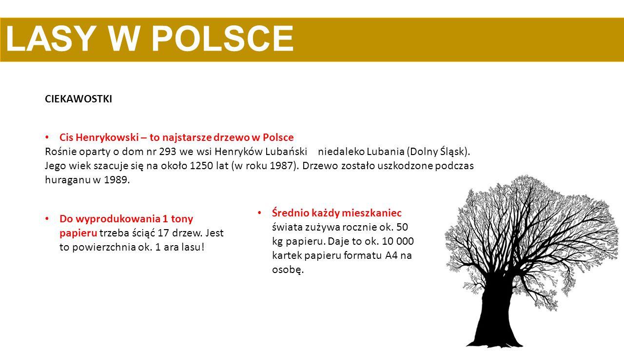 LASY W POLSCE CIEKAWOSTKI