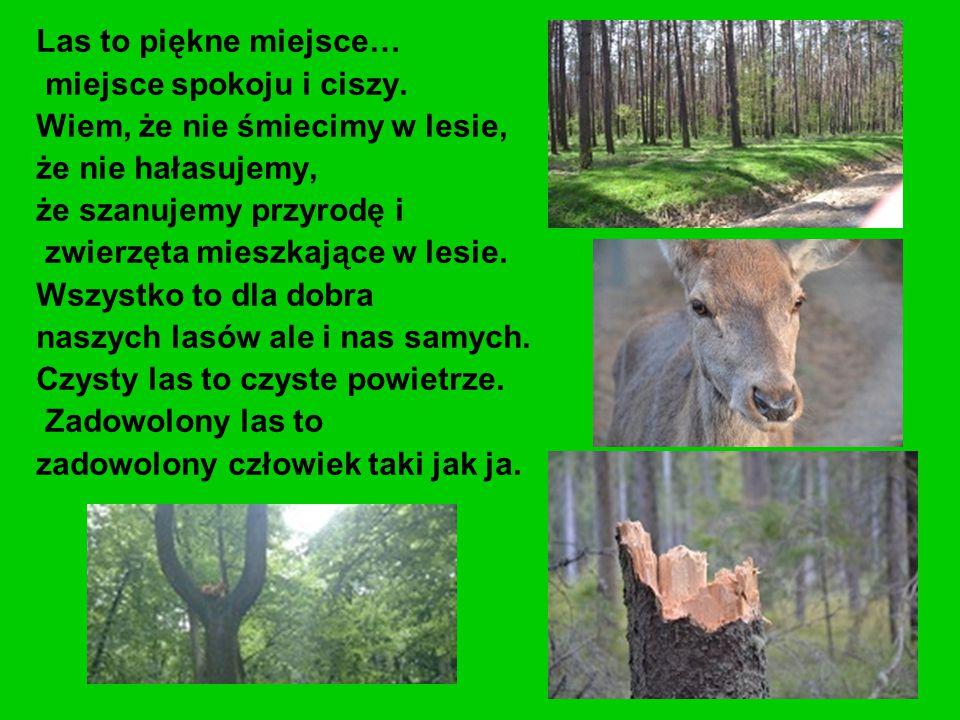 Las to piękne miejsce… miejsce spokoju i ciszy. Wiem, że nie śmiecimy w lesie, że nie hałasujemy,
