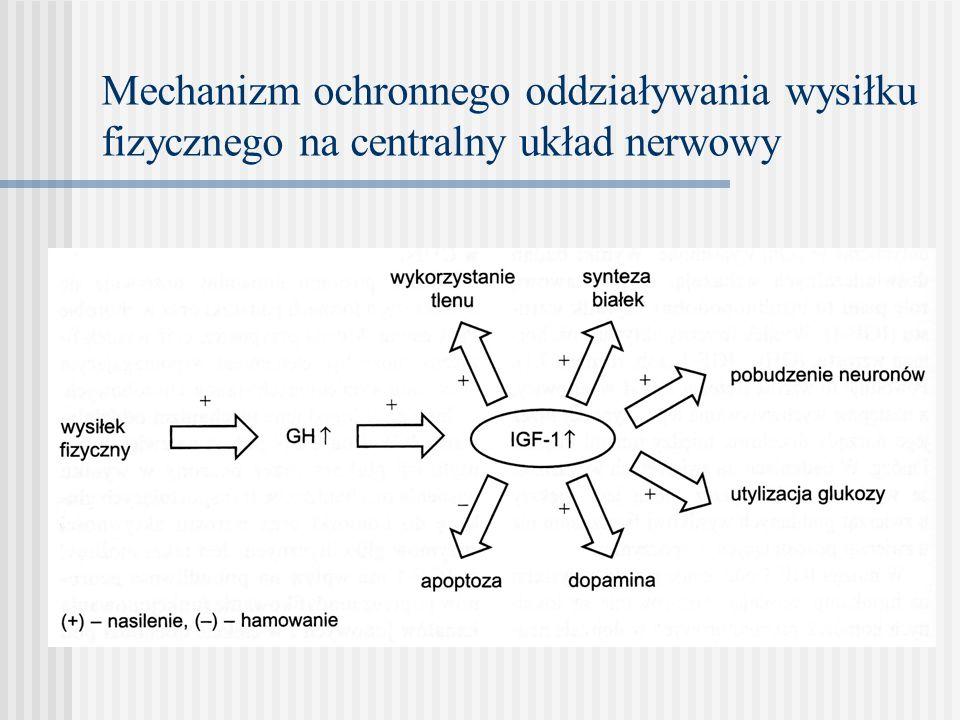 Mechanizm ochronnego oddziaływania wysiłku fizycznego na centralny układ nerwowy