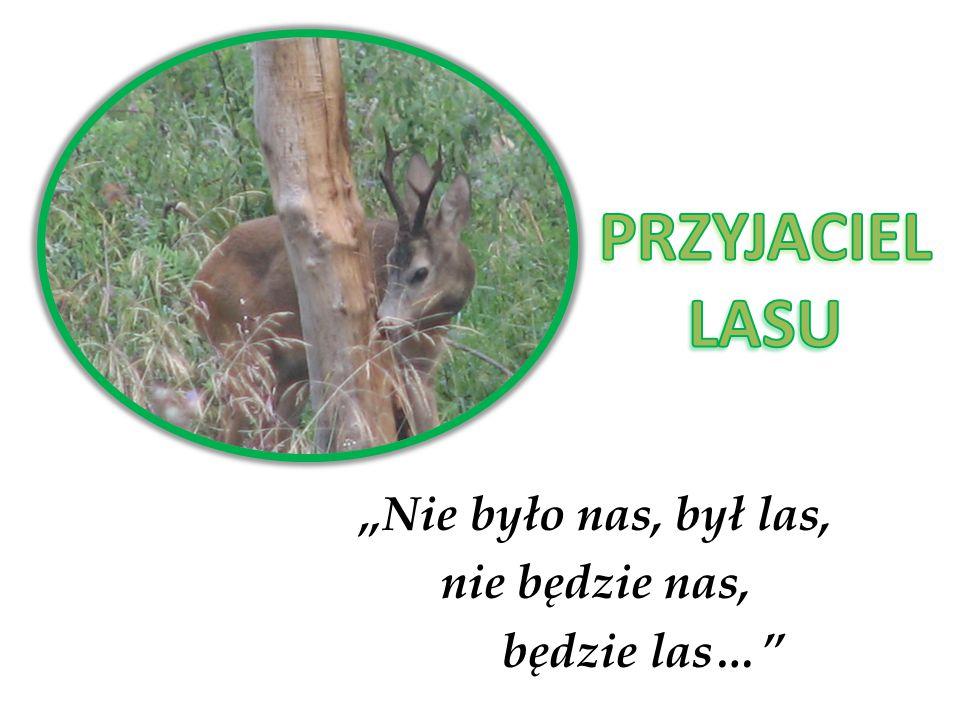 """""""Nie było nas, był las, nie będzie nas, będzie las…"""
