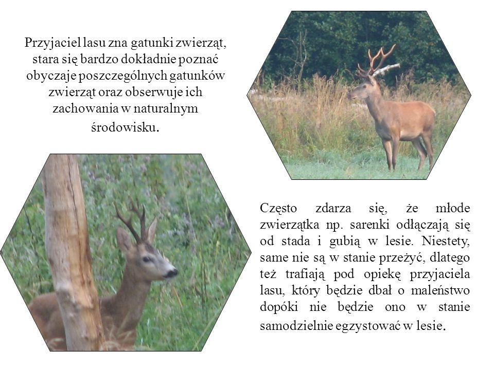 Przyjaciel lasu zna gatunki zwierząt, stara się bardzo dokładnie poznać obyczaje poszczególnych gatunków zwierząt oraz obserwuje ich zachowania w naturalnym środowisku.
