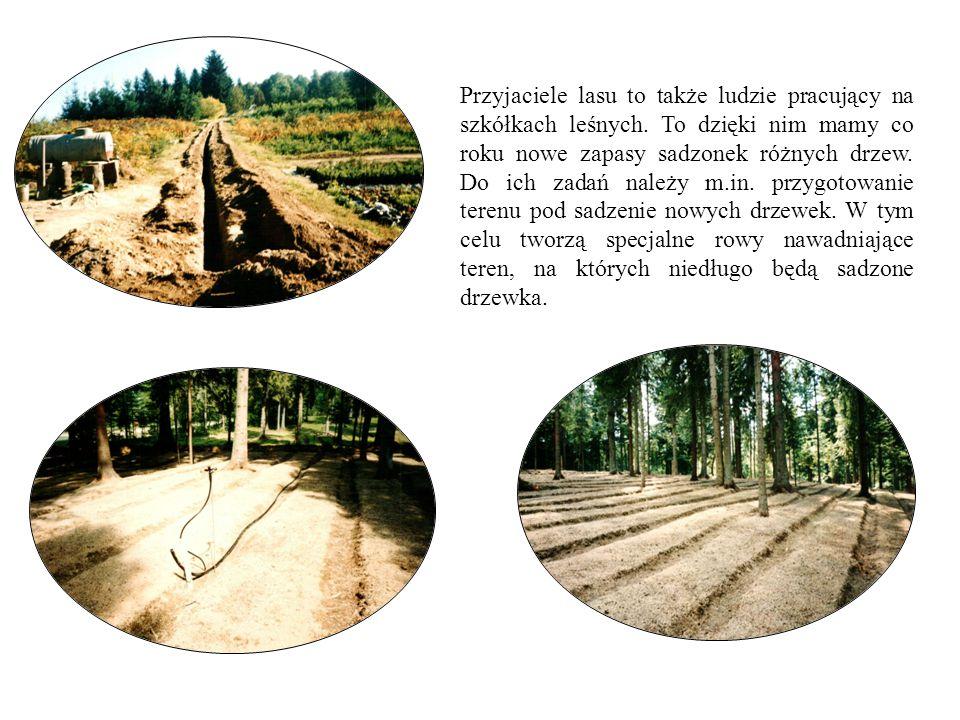 Przyjaciele lasu to także ludzie pracujący na szkółkach leśnych