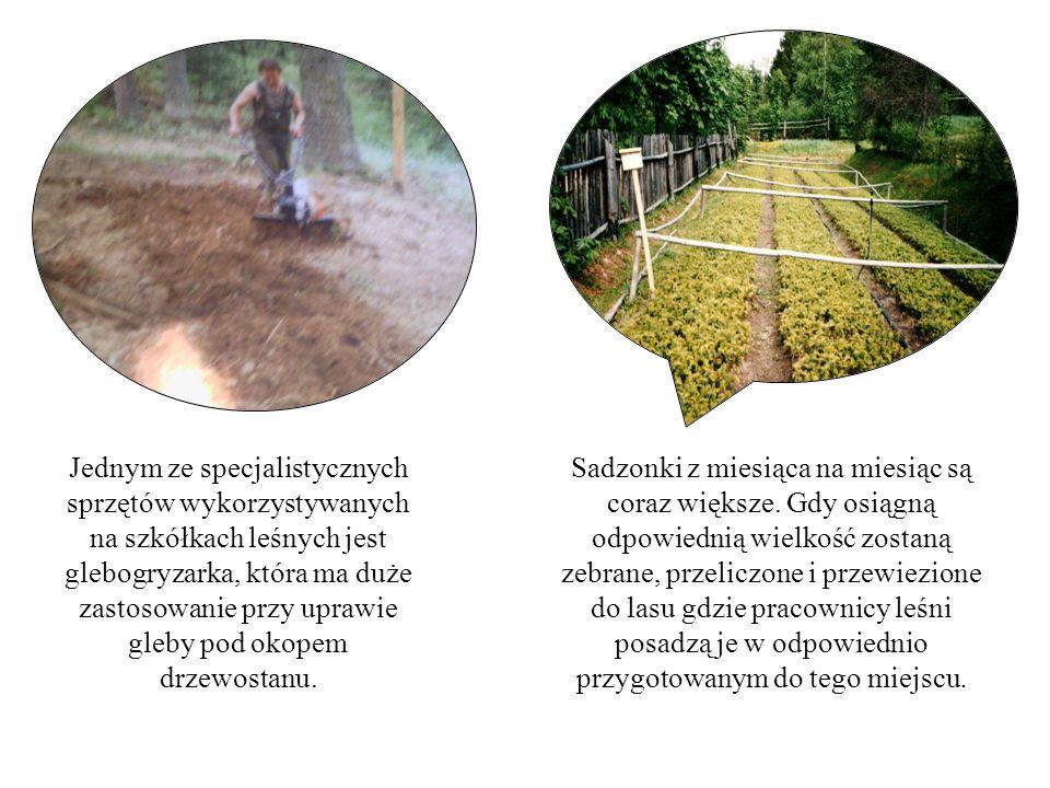 Jednym ze specjalistycznych sprzętów wykorzystywanych na szkółkach leśnych jest glebogryzarka, która ma duże zastosowanie przy uprawie gleby pod okopem drzewostanu.