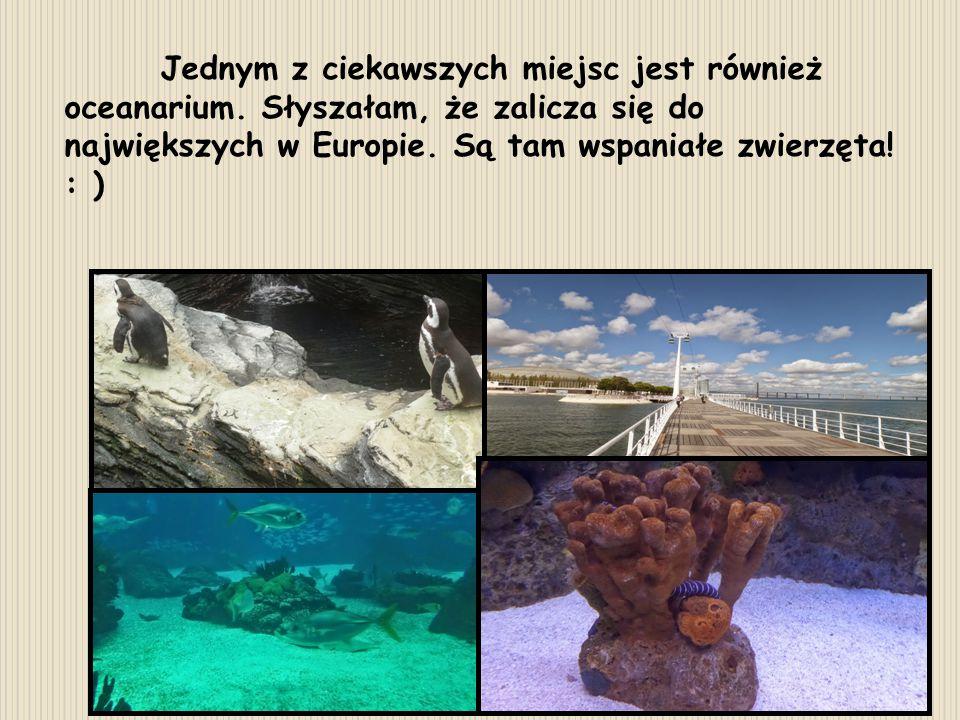 Jednym z ciekawszych miejsc jest również oceanarium