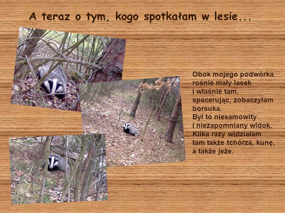 A teraz o tym, kogo spotkałam w lesie...