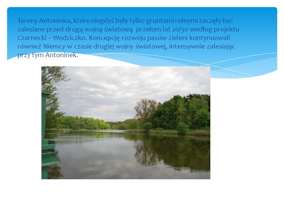 Tereny Antoninka, które niegdyś były tylko gruntami rolnymi zaczęły być zalesiane przed drugą wojną światową przełom lat 20/30 według projektu Czarnecki – Wodziczko.