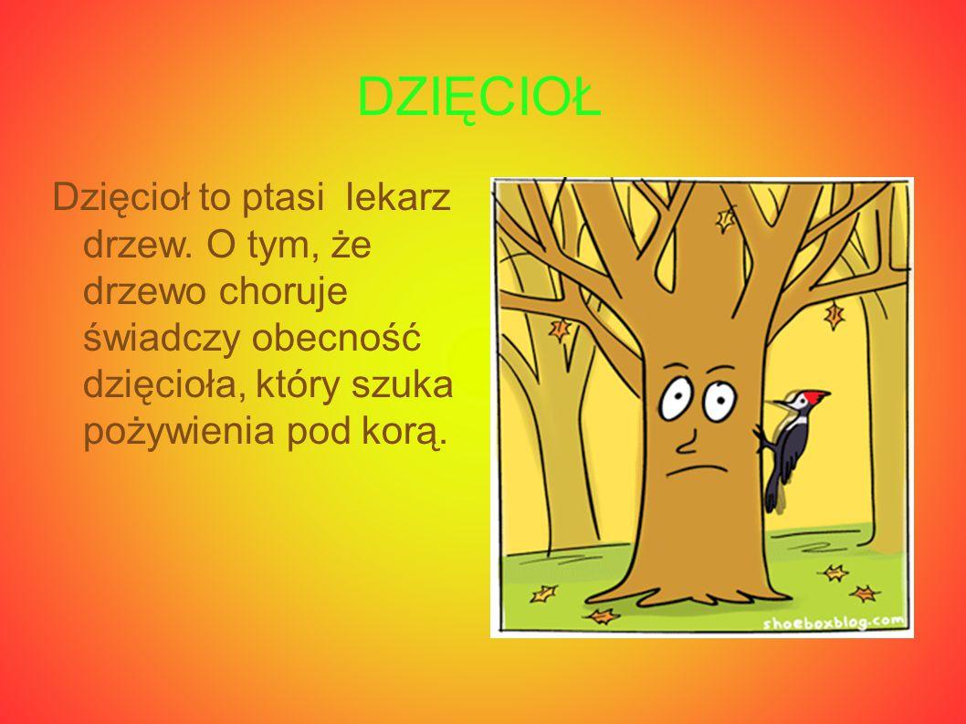 DZIĘCIOŁ Dzięcioł to ptasi lekarz drzew.