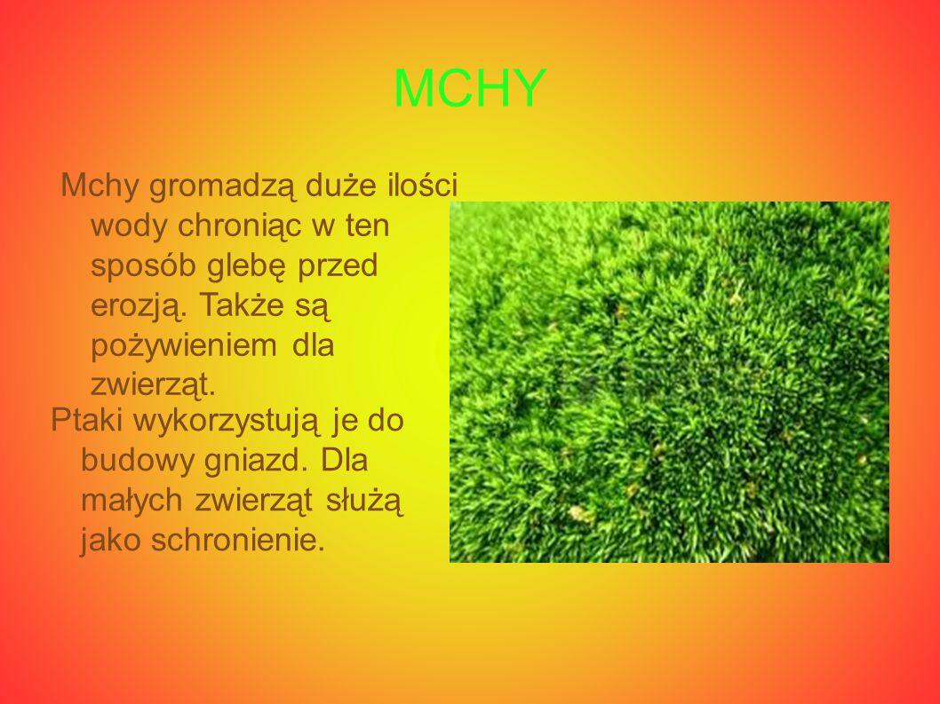 MCHY Mchy gromadzą duże ilości wody chroniąc w ten sposób glebę przed erozją. Także są pożywieniem dla zwierząt.