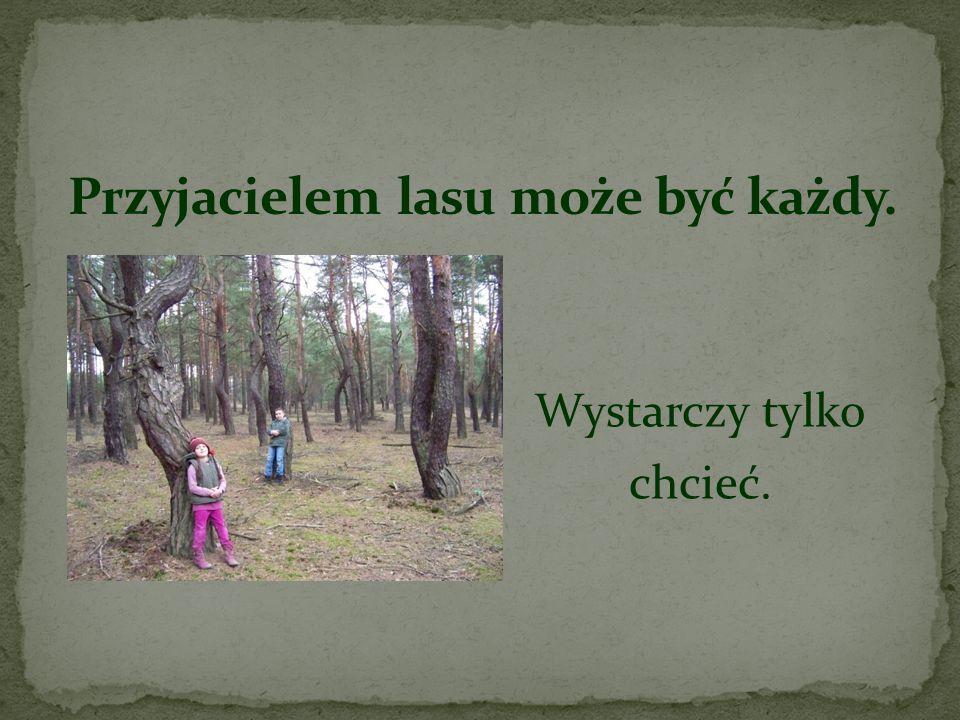 Przyjacielem lasu może być każdy.