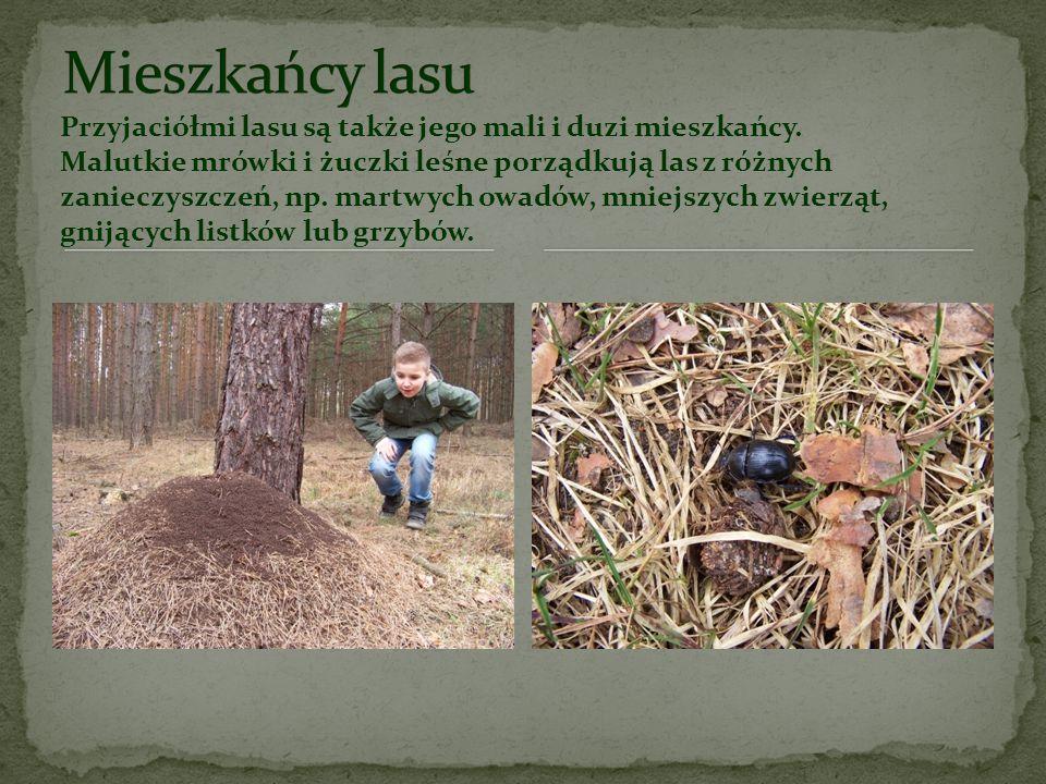 Mieszkańcy lasu Przyjaciółmi lasu są także jego mali i duzi mieszkańcy.