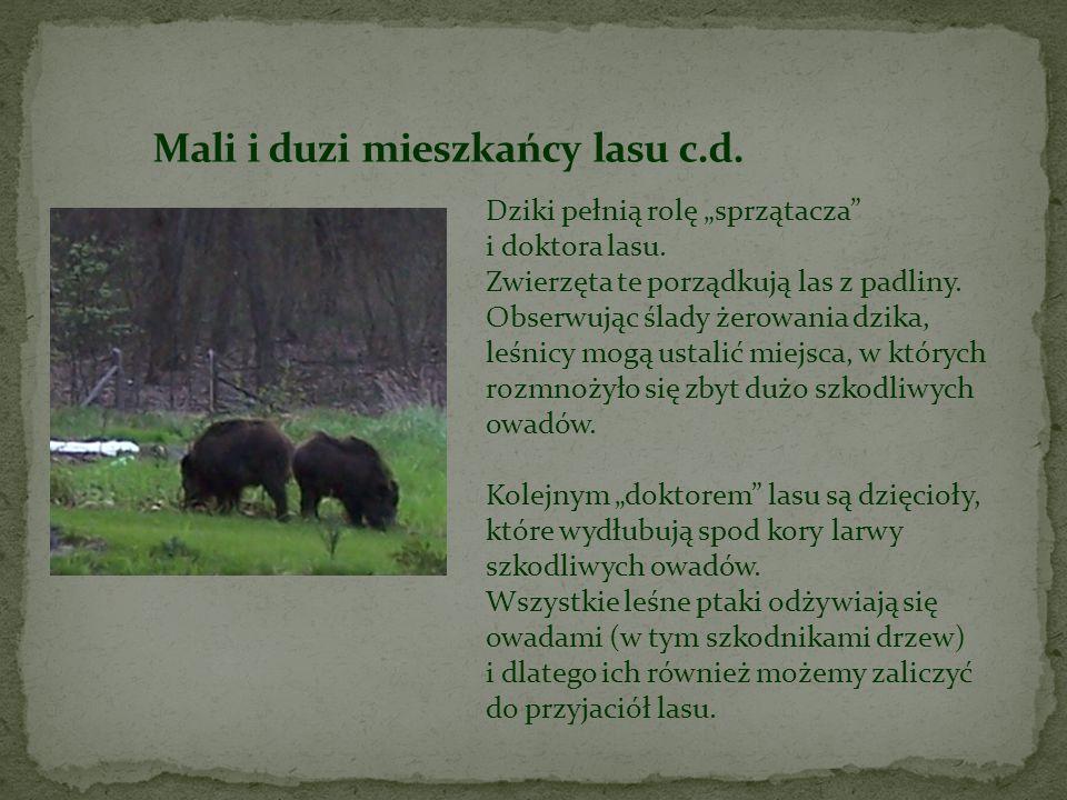 Mali i duzi mieszkańcy lasu c.d.