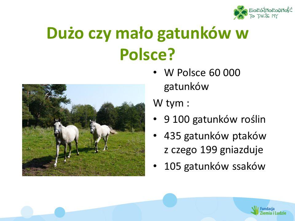 Dużo czy mało gatunków w Polsce