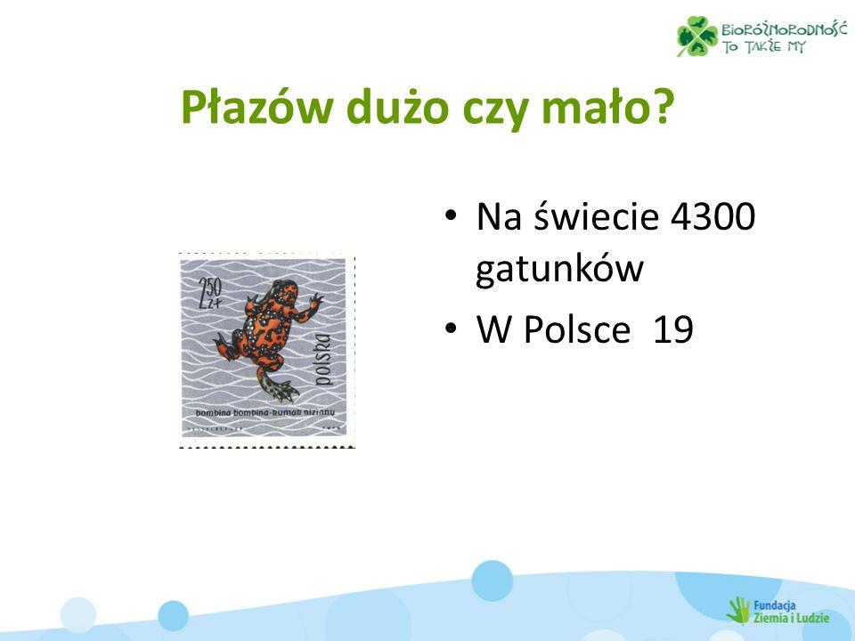 Płazów dużo czy mało Na świecie 4300 gatunków W Polsce 19